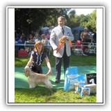 'XX-SHOW'. Antaleks Fifth Element (11 months) - J.ClubWiner, BIS-3. Judge: Leurent Pichard. Owner: Ludmila Shamargina.