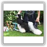 J.RUS CH Star Inlay Celebrity Antaleks (1years 1 monts)